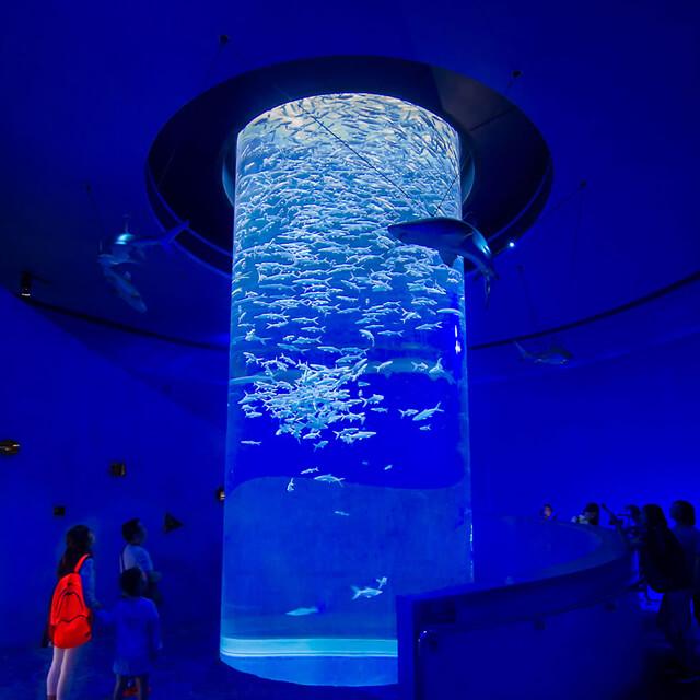 Ocean Park Hong Kong Aquarium